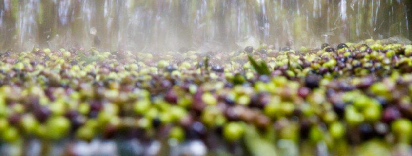 Oliven in der Ölpresse