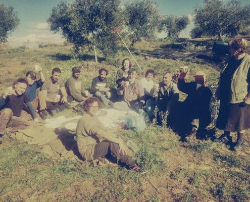 Alle helfen mit bei der Olivenernte