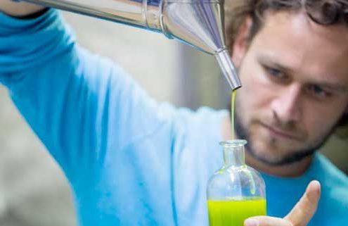 Aiolos Faires Olivenöl Qualität vor Quantität