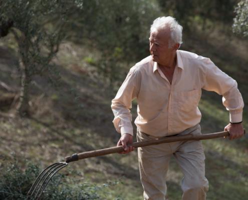 Sorgfalt und Handarbeit sind wichtige Zutaten für gutes Olivenöl aus Griechenland