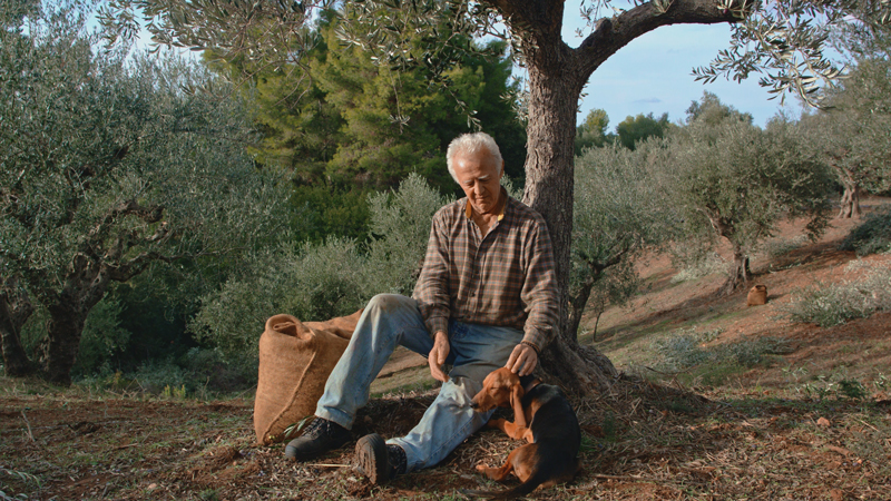 Mr. Manolakis mit seinem Hund bei der Ernte