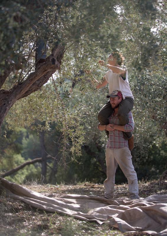 Ophelia und Phil beim Ernten von Kalamata Oliven