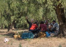 Nach der Ernte genießt das Ernteteam die Jause im Olivenhain.